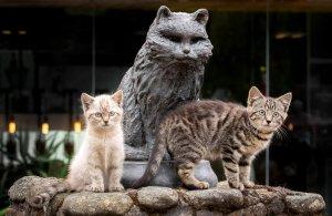 meow!, disse l'anima di Toswer